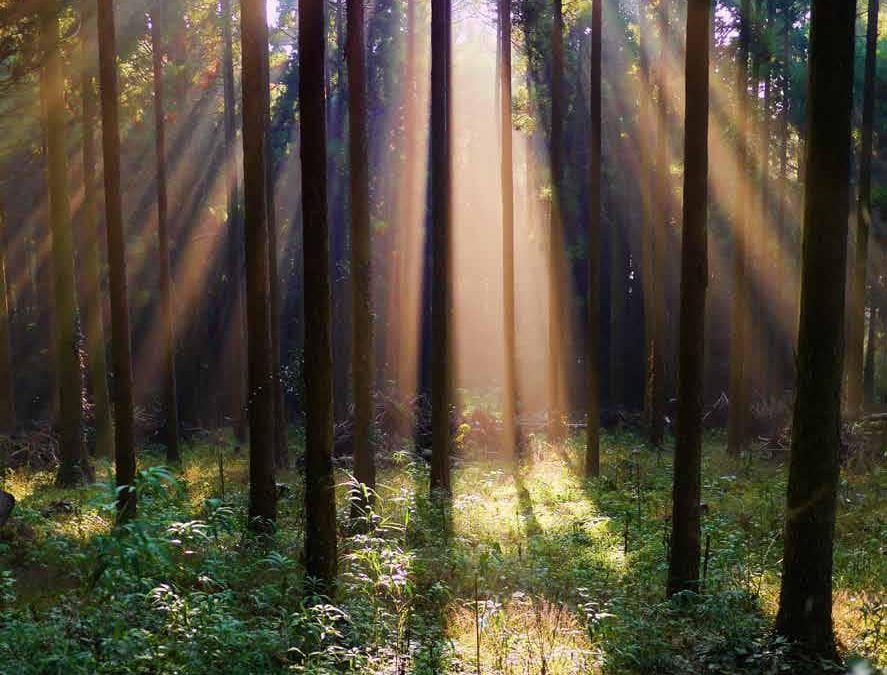 Is my inner being like an unknown forest?