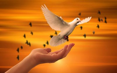 Desire VIES with PEACE?